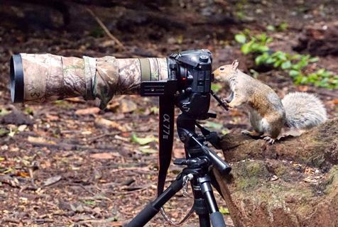 可爱小松鼠化身摄影师 有模有样萌翻了