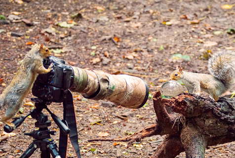 小松鼠化身摄影师拍同伴萌翻了