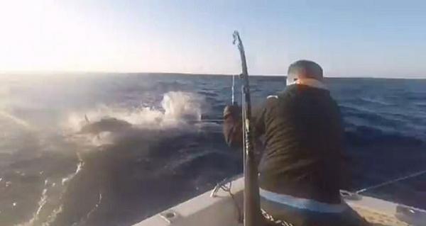 澳钓鱼者险被巨大马林鱼刺穿脑袋 场面惊险十足