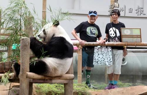 马媒:美国老夫妇变身超级熊猫迷 每年都探望熊猫
