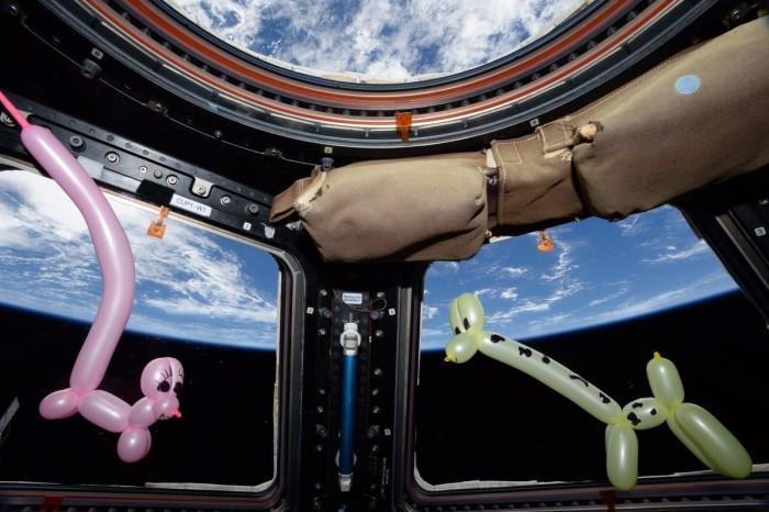 "NASA宇航员在太空收养两只""宠物"""