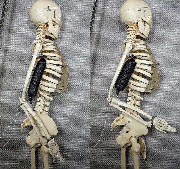 最逼真人造肌肉问世 这会让未来机器人更强大