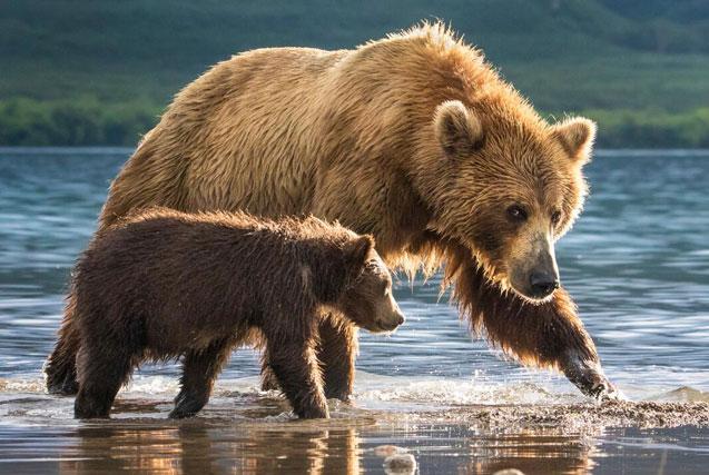 《国家地理》自然摄影佳作 震撼人心