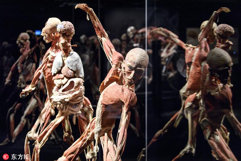 生物塑化是德国解剖学家哈根斯(gunther von hagens)发明的一种可以把图片