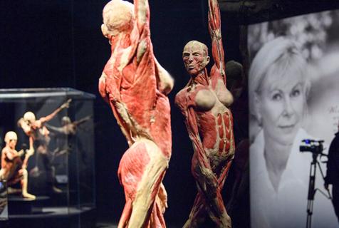 瑞士举办世界标本展 揭人体奥秘