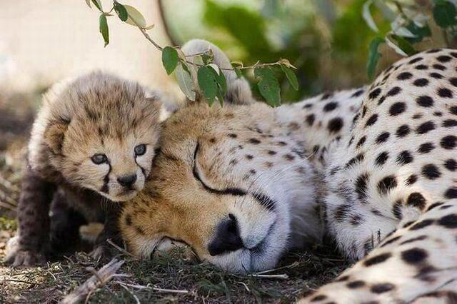让宝宝再睡一会儿图片