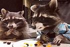 俄浣熊对零食大快朵颐