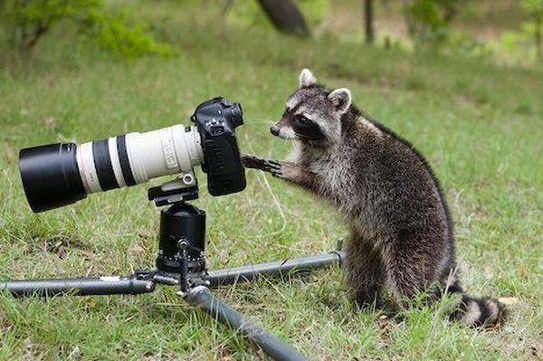 动物界的摄影大师上线了图片