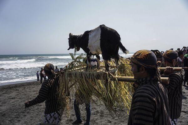 印尼日惹民众庆祝新年 民众抬羊入海祭祀