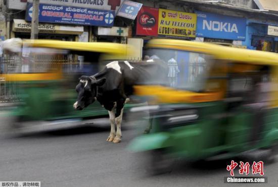 """奶牛爬出货车顶眺望风景惹人笑 网友:它想""""越狱"""""""