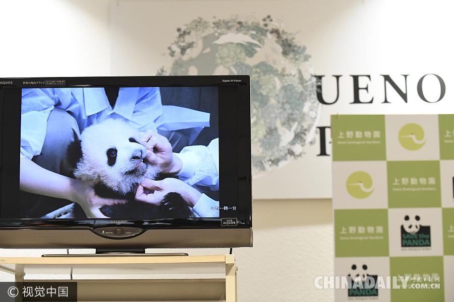 日本上野动物园熊猫宝宝迎来百天纪念日 名字近期公布