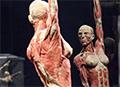 瑞士举办世界人体标本展 揭人体奥秘