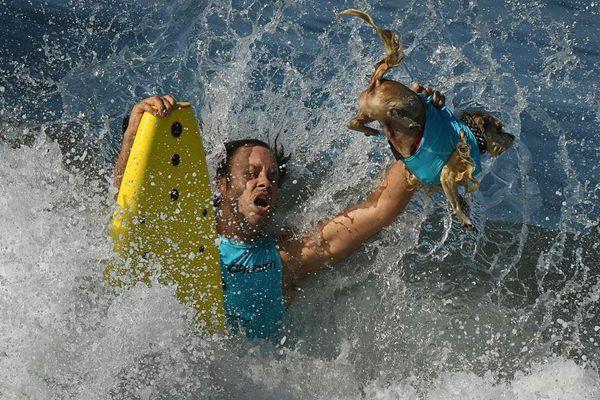 美国:冲浪大赛狗狗当主角 四条腿驾驭冲浪板舍我其谁