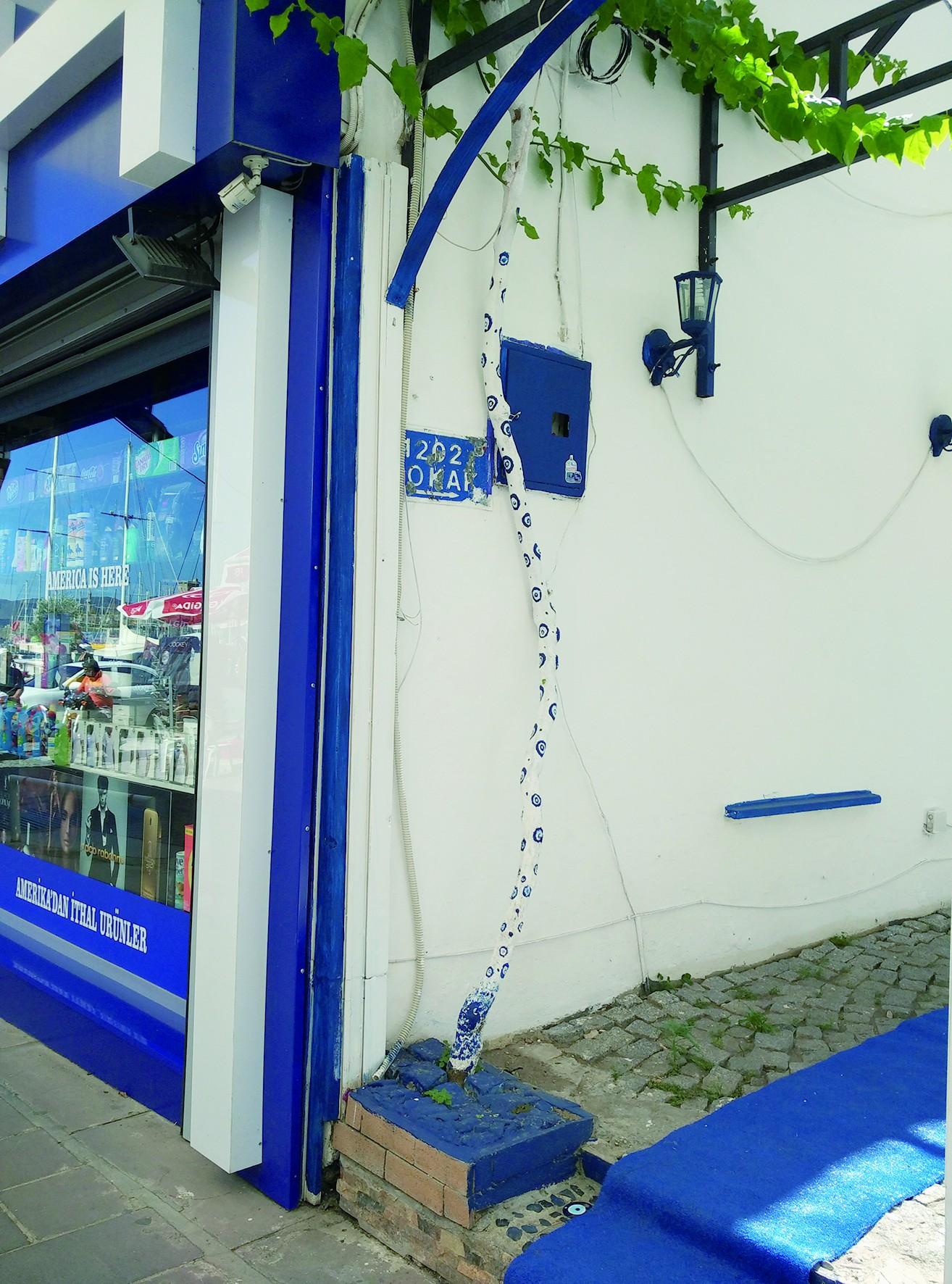 土耳其白色小镇博德鲁姆 邂逅蓝眼睛树
