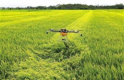无人机统防统治 县农委邀企业免费为农户防治水稻
