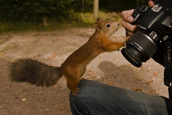 看看宝宝的拍照技术怎么样图片
