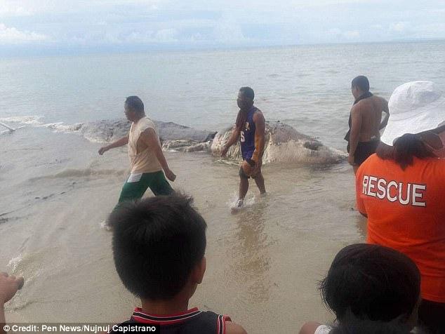 史前巨兽?菲律宾海岸惊现神秘怪物尸体