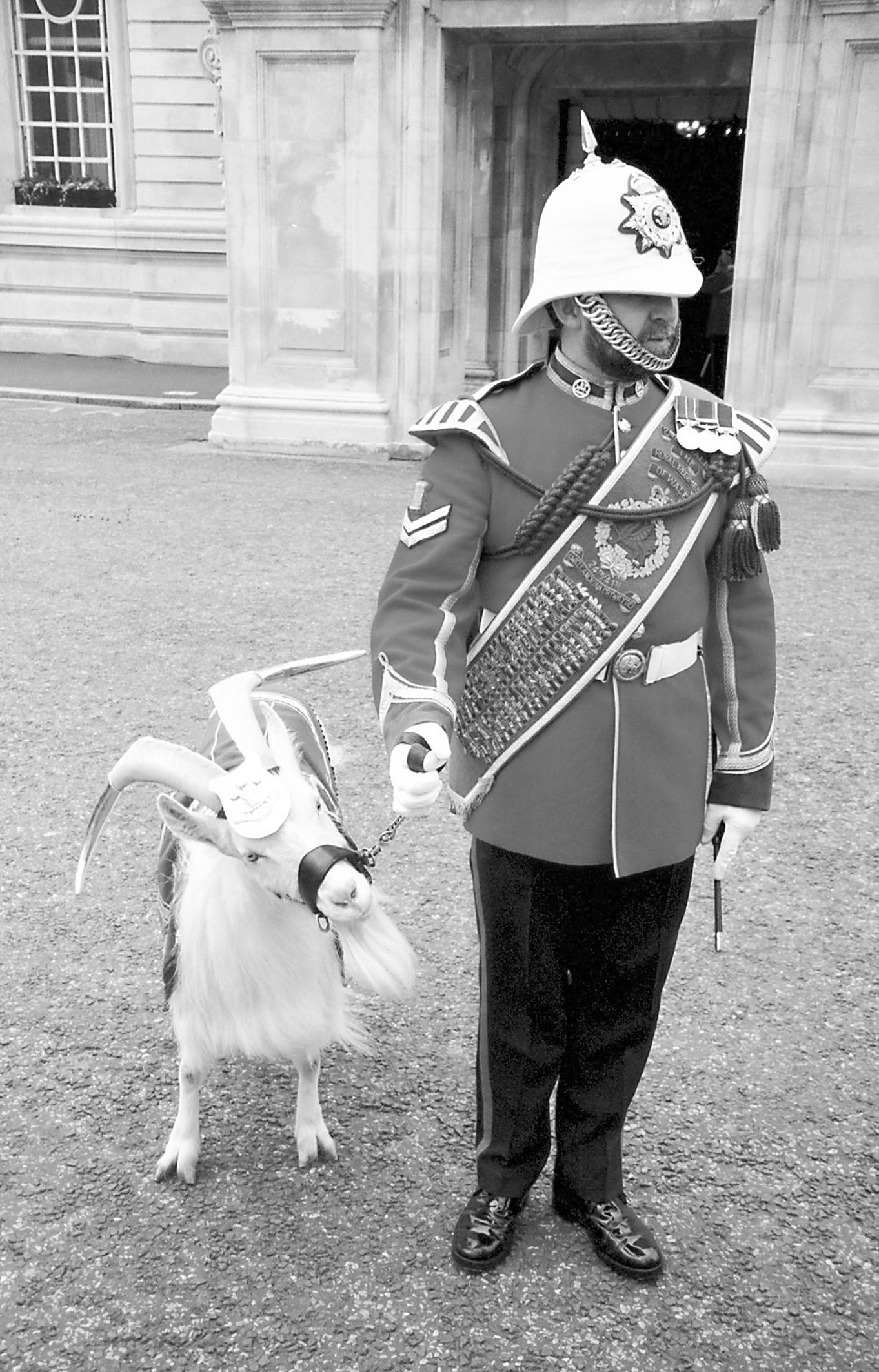 鹦鹉曾对女王出言不逊 英军动物吉祥物军衔不低