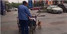 暖心!狗狗帮主人做保洁 3年间从未间断