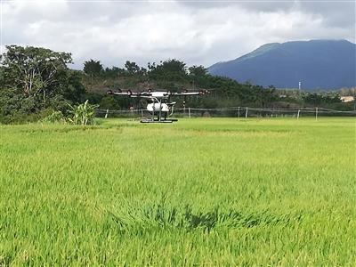三亚利用植保无人机为农户无偿防治水稻病虫害