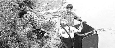 四川78条鳄鱼转运途中集体出逃 目前已找回75条