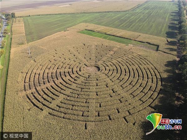 航拍波兰玉米地迷宫 由10万株玉米植株组成