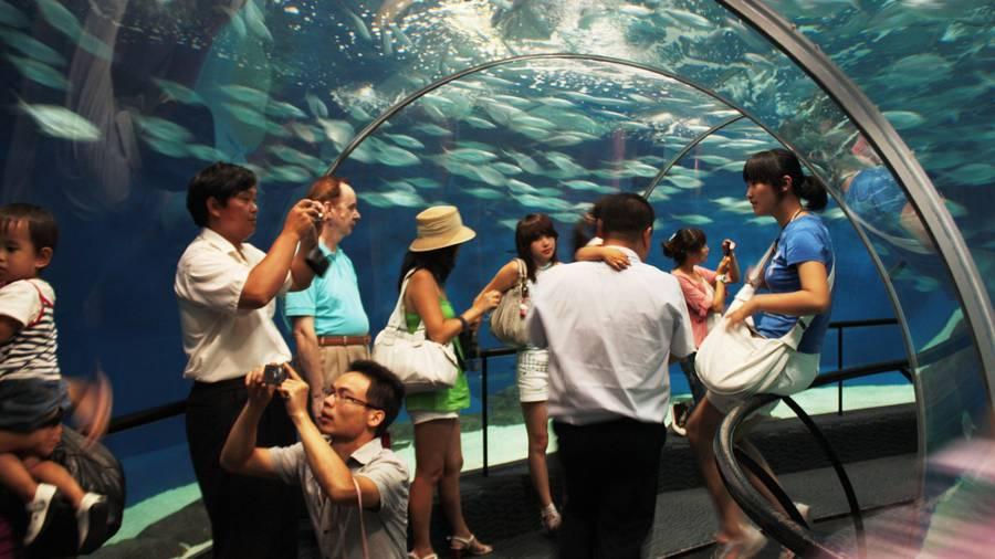 外媒:支付宝有望推动中国人到新西兰旅游