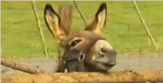 德国驴子错把豪车当美食 一顿啃掉3万欧元