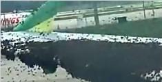 印尼蜂群停落机翼 致飞机延误起飞90分钟