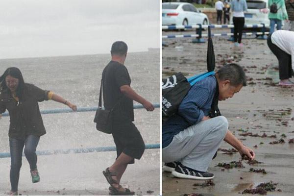 青岛国庆首日遇狂风 游客海边观潮捡海带