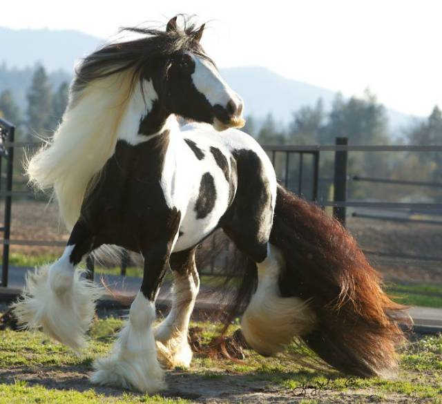 我是爱卖萌的小马驹子图片