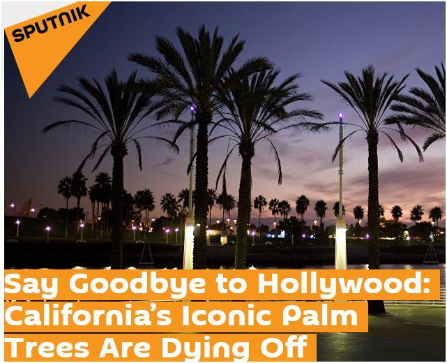 """加州或""""告别""""棕榈树 政府拟用耐旱树木御高温"""
