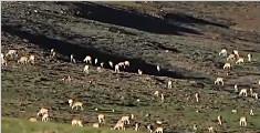 越野车追赶藏羚羊事件:涉事7人被罚10.5万