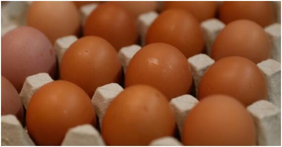 日本科学家在鸡蛋中培育药物 或可降低治疗费用
