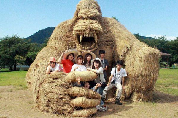 """日本瓦拉艺术节 """"稻田艺术""""令人惊叹"""