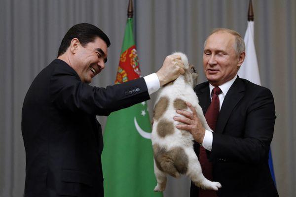 土库曼斯坦总统送普京软萌小狗 画风有点萌