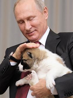硬汉总统普京的狗狗情缘尽显柔情