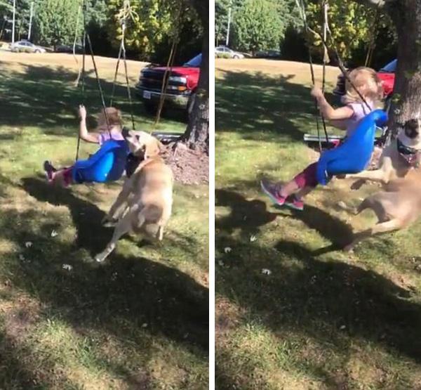 美国一女孩荡秋千将身后小狗撞飞 场面滑稽