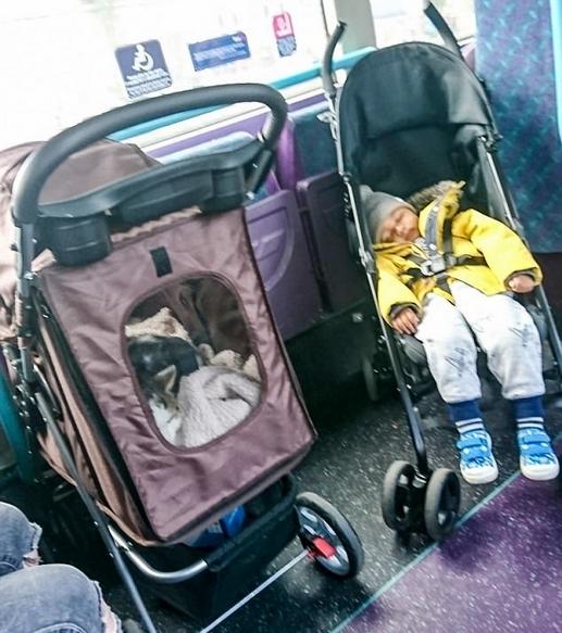英国公交上猫占人位 1岁婴儿被迫站着乘车