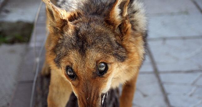 狂犬病很可怕? 俄媒告诉你5条关于狂犬病必知知识