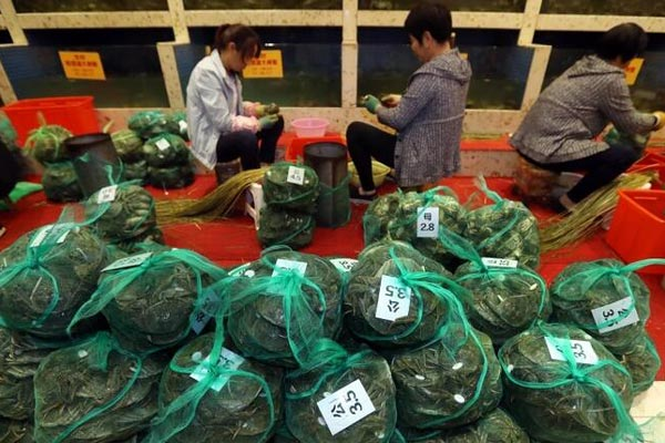 阳澄湖大妈一天捆蟹3000只 月入上万元