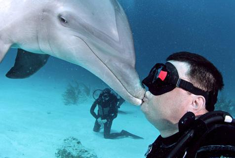 海豚热情好客主动献吻潜水员画面超有爱