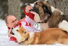 硬汉总统普京的狗狗情缘
