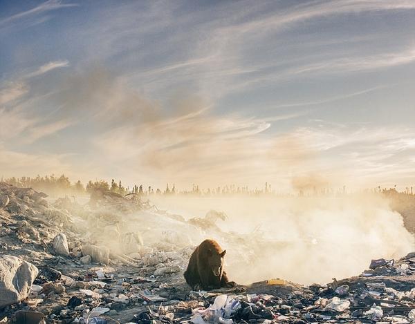 加棕熊蹲坐垃圾焚烧场内神情绝望无助引人深思
