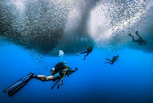 深海摄影 属于海洋的致命吸引力