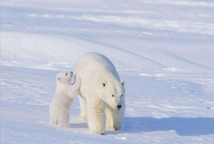 让你比95%的人更懂北极