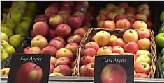 转基因苹果三周不变色