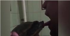 男子假装亲吻乌龟却被咬舌