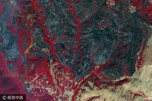 美国加州山火灾区近红外卫星图超震撼