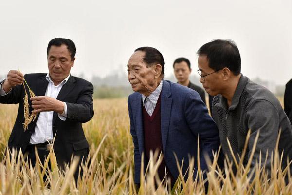 """袁隆平""""超级稻""""亩产1149公斤 再创纪录"""
